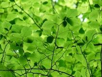 leaves-167478_640
