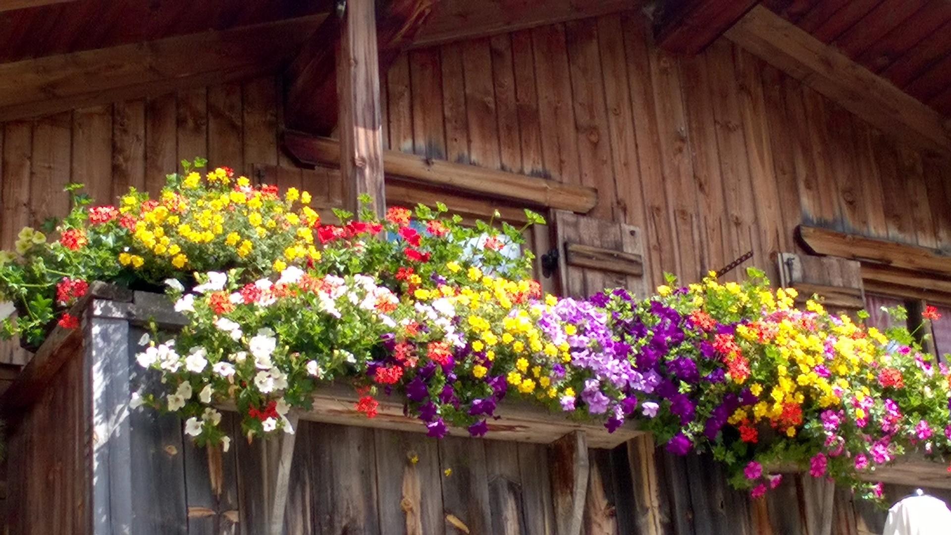 Balconi fioriti di montagna ambra garden designer for Piccoli piani di baite