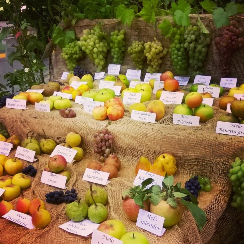 Un frutteto in giardino
