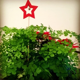 capelvenere stella natale fabbian garden
