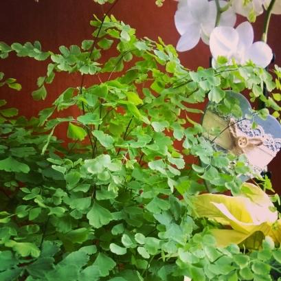 capelvere orchidea ambra garden